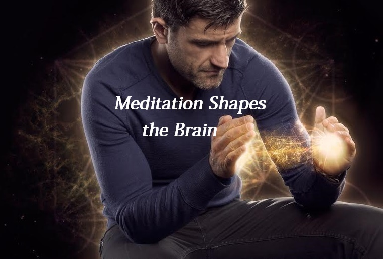Meditation Shapes the Brain