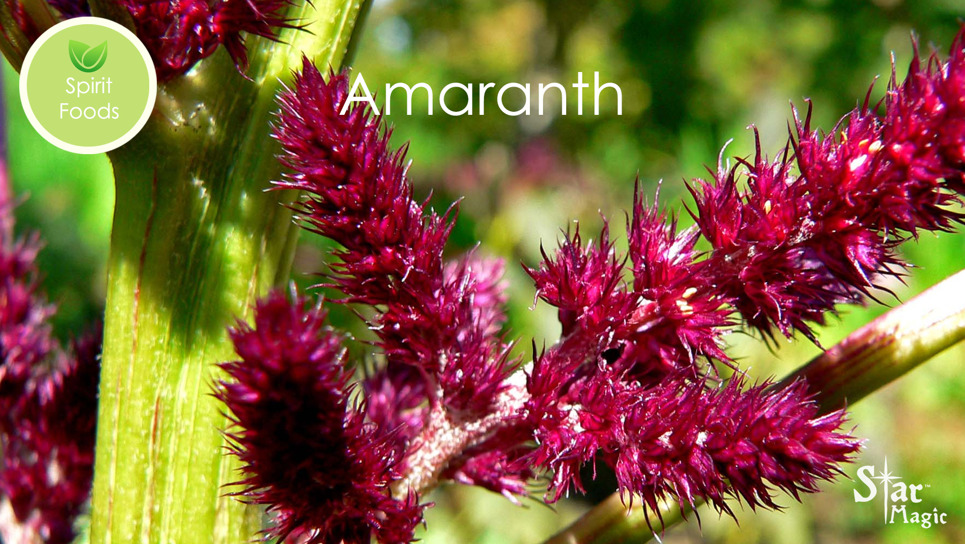 Spirit Food – Amaranth